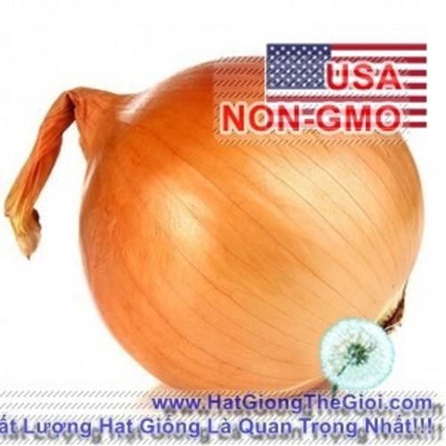 1g-Hạt Giống Hành Củ Vàng - Texas Grano Allium cepa - 8700555 , 17945277 , 15_17945277 , 8500 , 1g-Hat-Giong-Hanh-Cu-Vang-Texas-Grano-Allium-cepa-15_17945277 , sendo.vn , 1g-Hạt Giống Hành Củ Vàng - Texas Grano Allium cepa