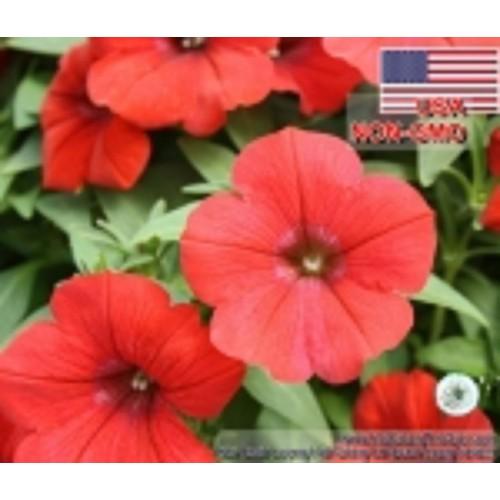 50h-Hạt Giống Hoa Dạ Yến Thảo - Lửa Thơm Petunia