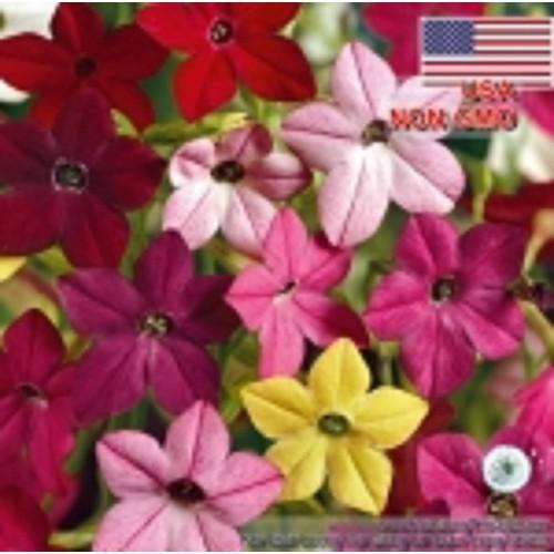 20h-Hạt Giống Hoa Thu ốc L á - Thơm Nhài Mix Nicotiana