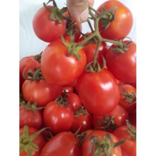 Gói 0.1g hạt giống cà chua f1 rosa