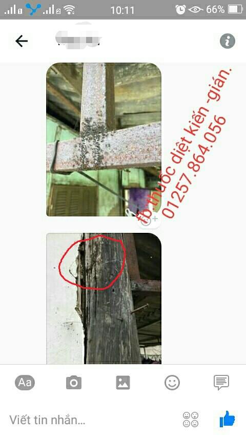Combo 5 lọ Thuốc diệt kiến gián tân gốc từ thiên nhiên - MLVMM 5