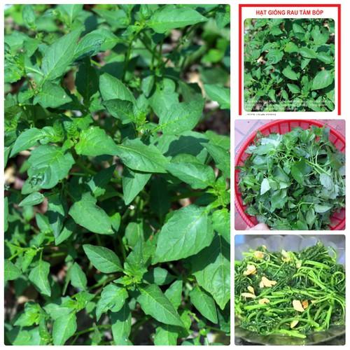 COMBO 2 gói hạt giống rau tầm bóp TẶNG 1 phân bón