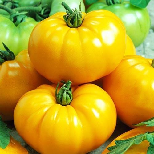 Hạt giống cà chua vàng qủa to 80-150 hạt - mua 3 tặng 1 cùng loại - năng suất, dễ trồng, bổ dưỡng - 12172946 , 19894509 , 15_19894509 , 20000 , Hat-giong-ca-chua-vang-qua-to-80-150-hat-mua-3-tang-1-cung-loai-nang-suat-de-trong-bo-duong-15_19894509 , sendo.vn , Hạt giống cà chua vàng qủa to 80-150 hạt - mua 3 tặng 1 cùng loại - năng suất, dễ trồng,
