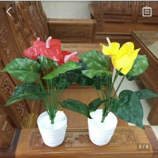 Cây giả Cây hồng môn nhựa trang trí nhà cửa - hongmon01 thumbnail