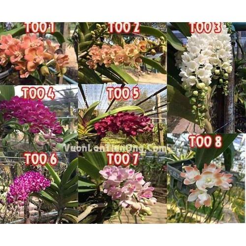 Bộ 10 cây ngọc điểm giống nhiều màu - 12127406 , 19956525 , 15_19956525 , 360000 , Bo-10-cay-ngoc-diem-giong-nhieu-mau-15_19956525 , sendo.vn , Bộ 10 cây ngọc điểm giống nhiều màu