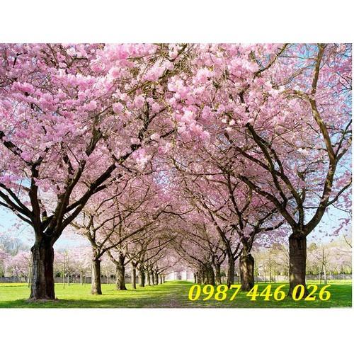 Gạch tranh vườn hoa anh đào nhật