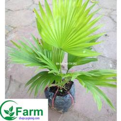 Phân bón NPK 18-46-0-DAP chuyên dùng hoa, cây cảnh, cây ăn trái – gói 200 gram BIOMAX