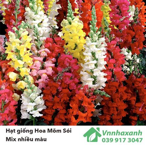 Hạt giống hoa mõm sói mix nhiều màu siêu đẹp, dễ trồng - 12041443 , 19658707 , 15_19658707 , 16000 , Hat-giong-hoa-mom-soi-mix-nhieu-mau-sieu-dep-de-trong-15_19658707 , sendo.vn , Hạt giống hoa mõm sói mix nhiều màu siêu đẹp, dễ trồng