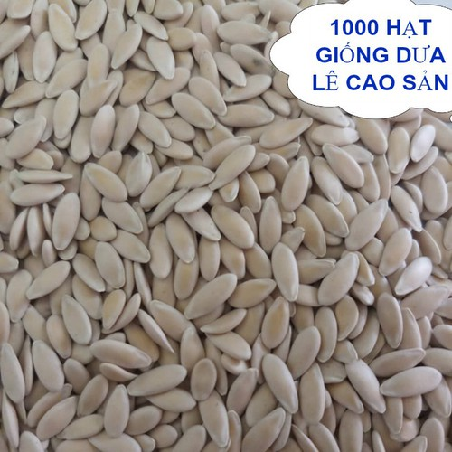 1000 hạt giống dưa lê - 12066201 , 19694639 , 15_19694639 , 900000 , 1000-hat-giong-dua-le-15_19694639 , sendo.vn , 1000 hạt giống dưa lê
