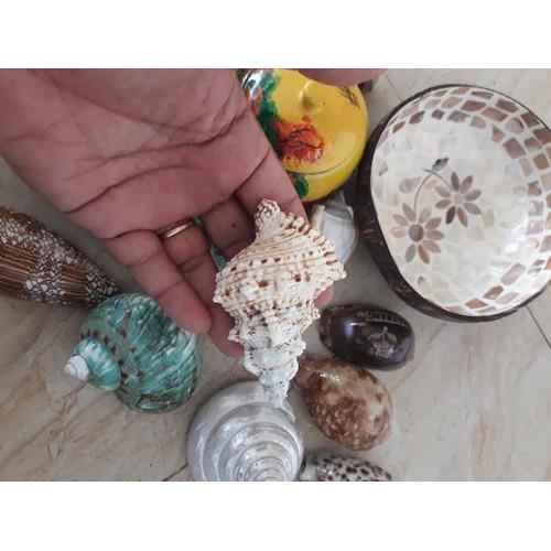 🎁🎁 vỏ ốc gai đẹp y hình - vỏ sò ốc mỹ nghệ - vỏ ốc sò trang trí