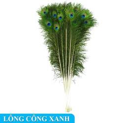 Bộ 10 cây lông công phong thủy loại mắt to hàng đẹp