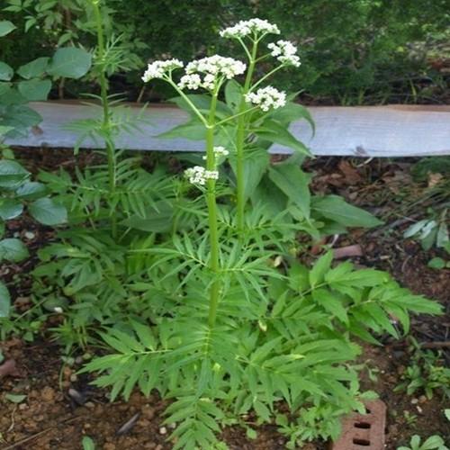 Bộ hạt giống cây nữ lang - 12890573 , 20847003 , 15_20847003 , 290000 , Bo-hat-giong-cay-nu-lang-15_20847003 , sendo.vn , Bộ hạt giống cây nữ lang