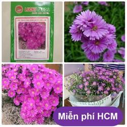 Gò vấp HOA TRONG NHÀ Hạt giống hoa Thạch thảo Thuần hóa Phù hợp khí hậu Việt Nam
