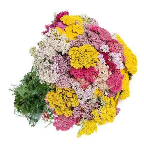 Hạt giống kỳ thảo chất lượng cao - Tặng kích mầm & Tài liệu hướng dẫn gieo trồng