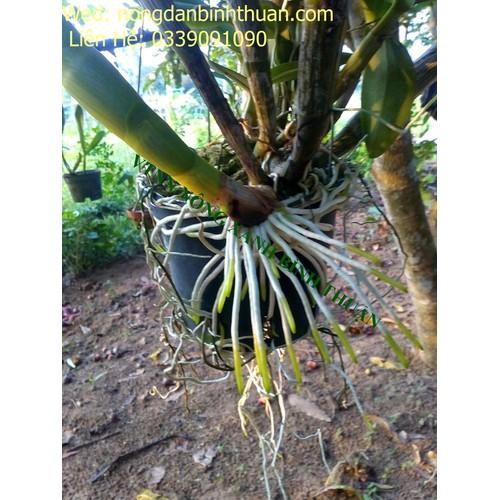 Phân bón lá kích rễ n3m lọ 100g