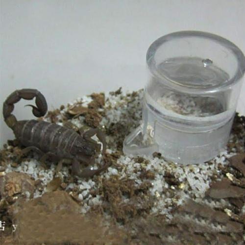 Chén đựng nước uống tự động cho bọ cạp nhện rết - 11855835 , 20998041 , 15_20998041 , 30000 , Chen-dung-nuoc-uong-tu-dong-cho-bo-cap-nhen-ret-15_20998041 , sendo.vn , Chén đựng nước uống tự động cho bọ cạp nhện rết
