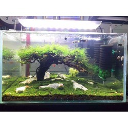 5 miếng rêu Minifiss trải nền bể cá cảnh, cột đá cực đẹp - minifiss lá cạn