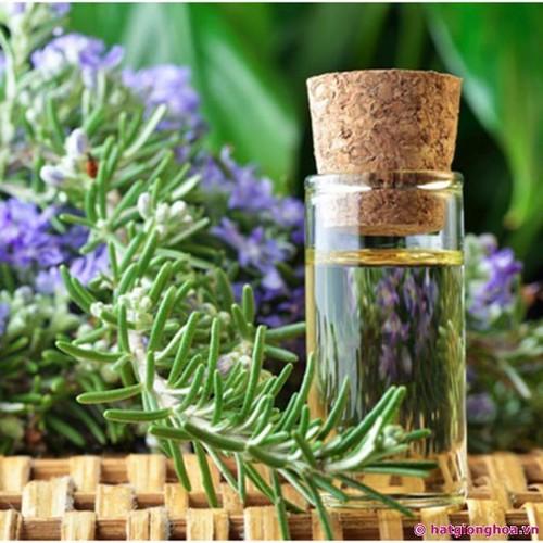 Combo 5 gói hạt giống cây hương thảo chất lượng cao - 13137607 , 21217574 , 15_21217574 , 94000 , Combo-5-goi-hat-giong-cay-huong-thao-chat-luong-cao-15_21217574 , sendo.vn , Combo 5 gói hạt giống cây hương thảo chất lượng cao