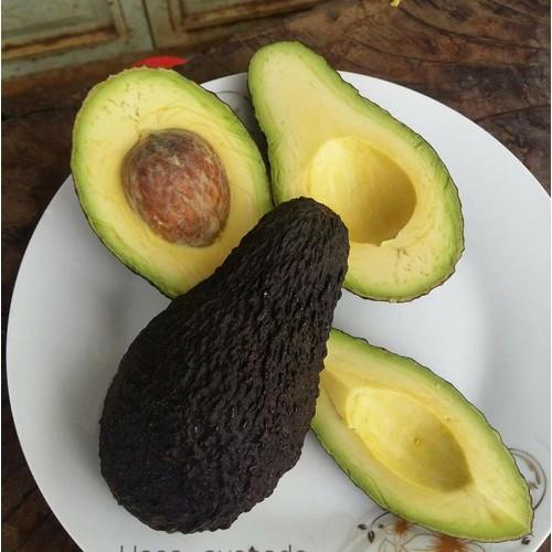 Cây giống bơ sáp trái dài - 17478449 , 21341279 , 15_21341279 , 150000 , Cay-giong-bo-sap-trai-dai-15_21341279 , sendo.vn , Cây giống bơ sáp trái dài
