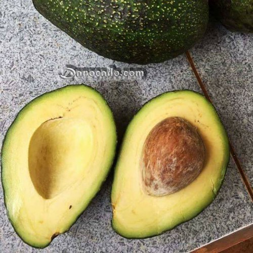 Cây giống bơ fuerte - 17478237 , 21341001 , 15_21341001 , 170000 , Cay-giong-bo-fuerte-15_21341001 , sendo.vn , Cây giống bơ fuerte