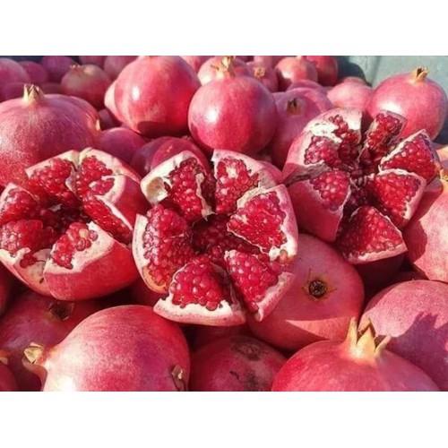 Cây giống lựu đỏ lùn ấn độ - 12645422 , 20500079 , 15_20500079 , 180000 , Cay-giong-luu-do-lun-an-do-15_20500079 , sendo.vn , Cây giống lựu đỏ lùn ấn độ