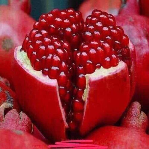 Cây giống lựu đỏ lùn ấn độ - 12735437 , 20633246 , 15_20633246 , 199000 , Cay-giong-luu-do-lun-an-do-15_20633246 , sendo.vn , Cây giống lựu đỏ lùn ấn độ