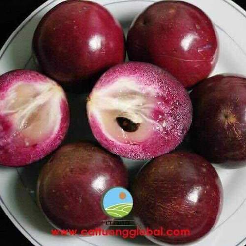 Cây giống vú sữa bơ hồng - 13400538 , 21616736 , 15_21616736 , 150000 , Cay-giong-vu-sua-bo-hong-15_21616736 , sendo.vn , Cây giống vú sữa bơ hồng