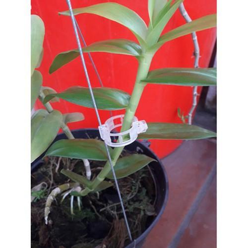 Vòng cố định cây trồng -100 cái - 13428639 , 21649006 , 15_21649006 , 60000 , Vong-co-dinh-cay-trong-100-cai-15_21649006 , sendo.vn , Vòng cố định cây trồng -100 cái