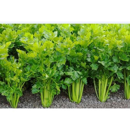 Combo 3 gói hạt giống rau cần tây - 13438506 , 21692672 , 15_21692672 , 45000 , Combo-3-goi-hat-giong-rau-can-tay-15_21692672 , sendo.vn , Combo 3 gói hạt giống rau cần tây