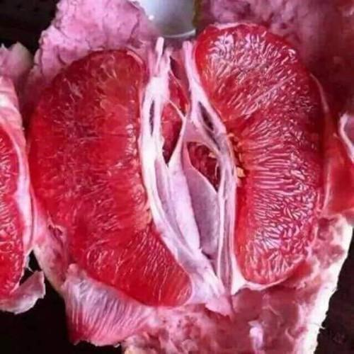Cây giống bưởi đỏ phúc kiến - 13461433 , 21718452 , 15_21718452 , 180000 , Cay-giong-buoi-do-phuc-kien-15_21718452 , sendo.vn , Cây giống bưởi đỏ phúc kiến