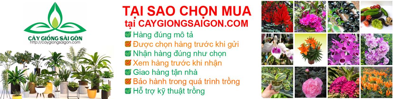 Cây Giống Sài Gòn