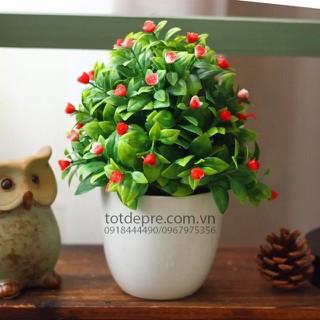 Chậu Và Cây Hoa Tiêu Để Bàn - hoatieu thumbnail