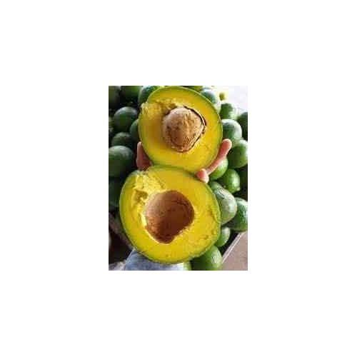 Cây giống bơ - 17528101 , 21787433 , 15_21787433 , 150000 , Cay-giong-bo-15_21787433 , sendo.vn , Cây giống bơ