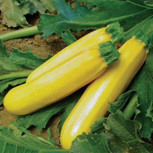 Combo 10 gói hạt giống bí ngòi vàng