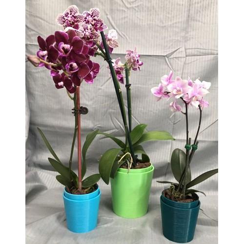 5 cây giống hoa lan hồ điệp - 17575175 , 21876580 , 15_21876580 , 220000 , 5-cay-giong-hoa-lan-ho-diep-15_21876580 , sendo.vn , 5 cây giống hoa lan hồ điệp