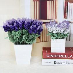 hoa giả - hoa lavender