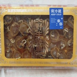Bào ngư trân châu mini hongkong