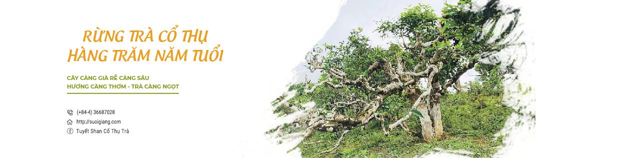 Trà Tuyết Shan Cổ Thụ