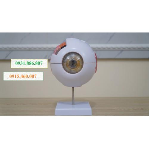 Mô hình giải phẫu mắt