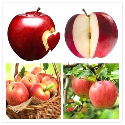 Hạt giống táo tây đỏ  chất lượng cao - tặng kích mầm & tài liệu hướng dẫn gieo trồng