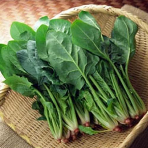 Trợ giá hạt giống rau chân vịt cải bó xôi eefy1 - 19736981 , 24867849 , 15_24867849 , 11505 , Tro-gia-hat-giong-rau-chan-vit-cai-bo-xoi-eefy1-15_24867849 , sendo.vn , Trợ giá hạt giống rau chân vịt cải bó xôi eefy1