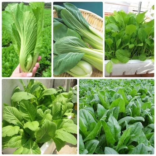 Trợ giá giảm 50 combo 05 gói hạt giống rau cải vip eefy1