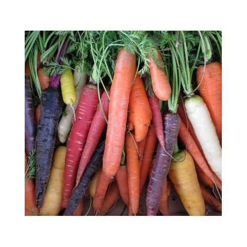 Trợ giá hạt giống củ cà rốt nhiều màu eefy1 - 19848018 , 25010943 , 15_25010943 , 12090 , Tro-gia-hat-giong-cu-ca-rot-nhieu-mau-eefy1-15_25010943 , sendo.vn , Trợ giá hạt giống củ cà rốt nhiều màu eefy1