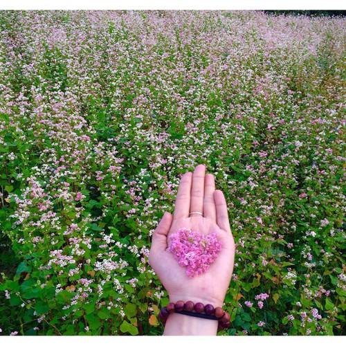 Trợ giá hạt giống hoa tam giác mạch eefy1 - 19388570 , 25010689 , 15_25010689 , 12090 , Tro-gia-hat-giong-hoa-tam-giac-mach-eefy1-15_25010689 , sendo.vn , Trợ giá hạt giống hoa tam giác mạch eefy1