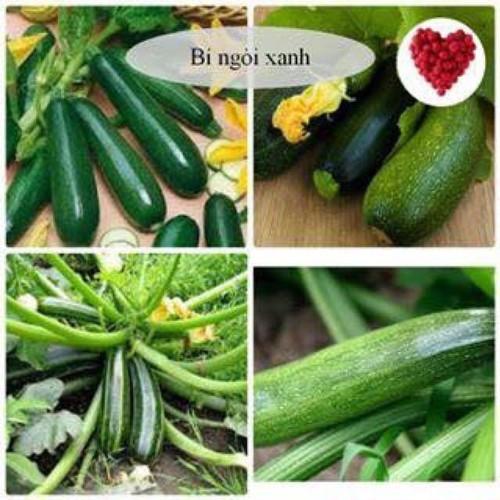 Trợ giá hạt giống bí ngòi xanh 10 hạt eefy1