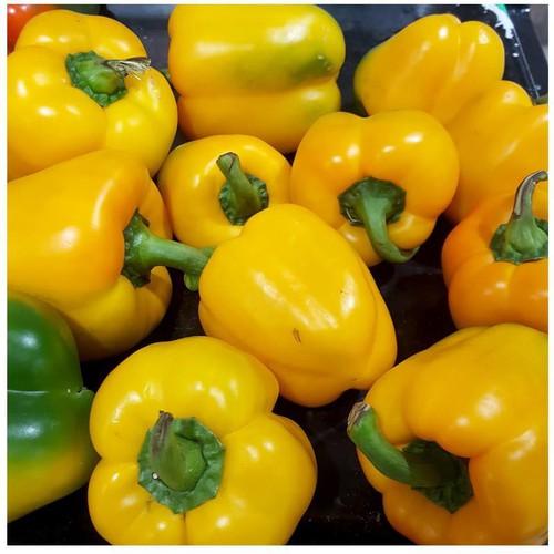 Trợ giá hạt giống ớt chuông ngọt màu vàng eefy1