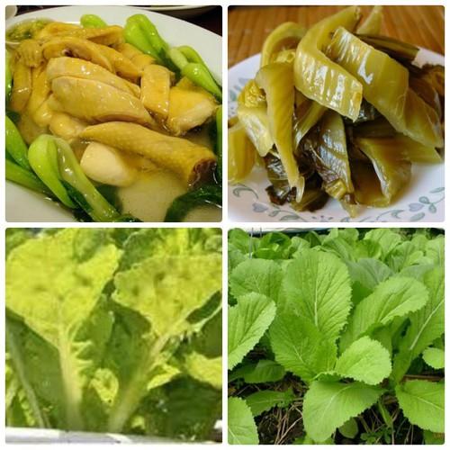 Trợ giá hạt giống cả bẹ vàng ngắn ngày hà giang 25 ngày thu hoach gói 20 gram eefy1