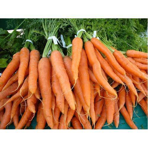 Trợ giá hạt giống cà rốt củ to hạt giống củ cà rốt cam eefy1 - 19847951 , 25010642 , 15_25010642 , 12090 , Tro-gia-hat-giong-ca-rot-cu-to-hat-giong-cu-ca-rot-cam-eefy1-15_25010642 , sendo.vn , Trợ giá hạt giống cà rốt củ to hạt giống củ cà rốt cam eefy1
