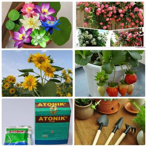 Trợ giá combo 04 gói hạt giống vườn xinh tặng kèm 2 gói kích mầm và 1 bộ dụng cụ làm vườn mini eefy1