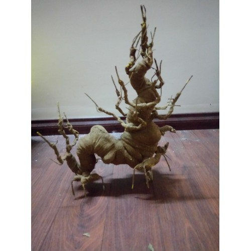 Gốc bonsai rồng  mập 25x35